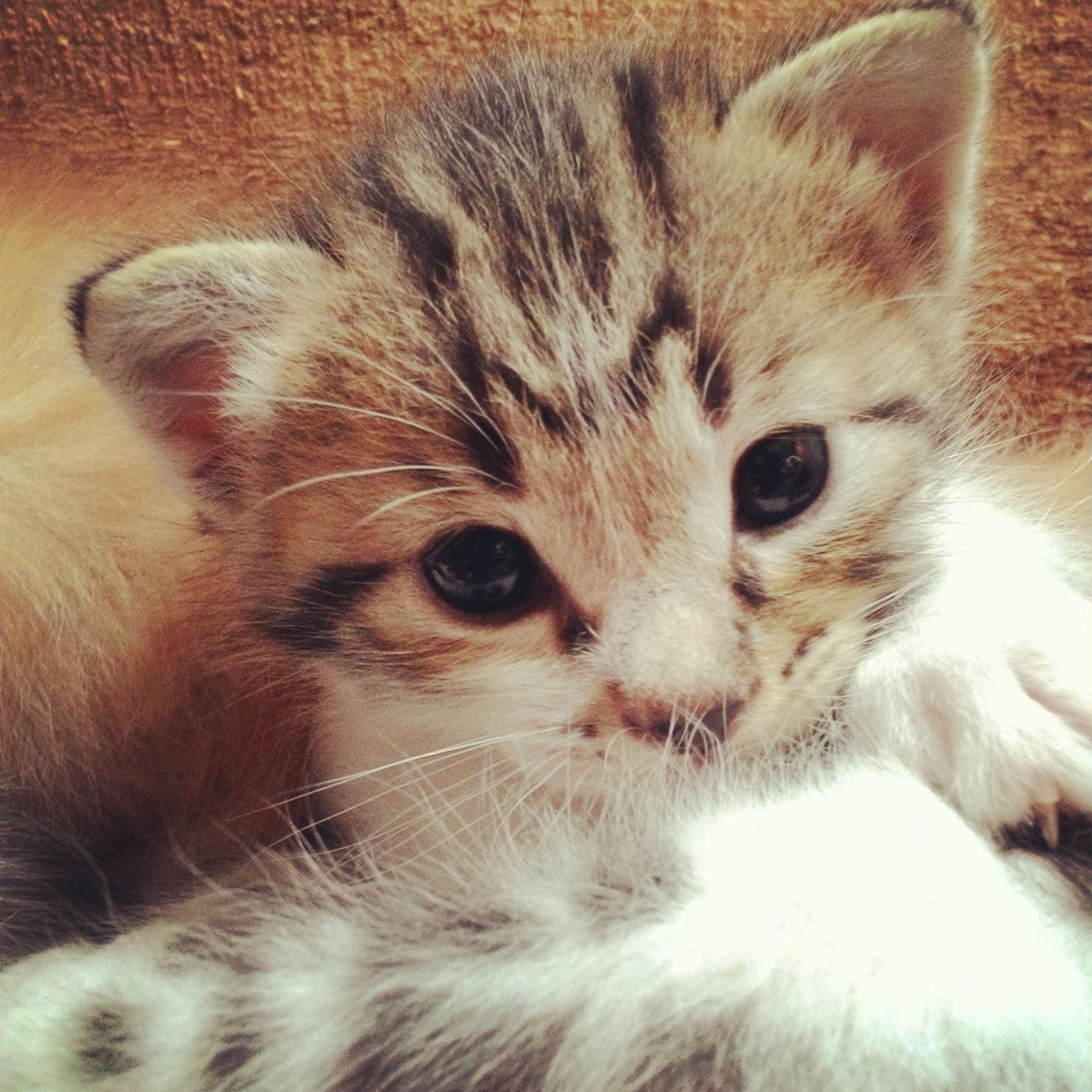 Kucing Pembaca Kucing Ku Kucing Page 2