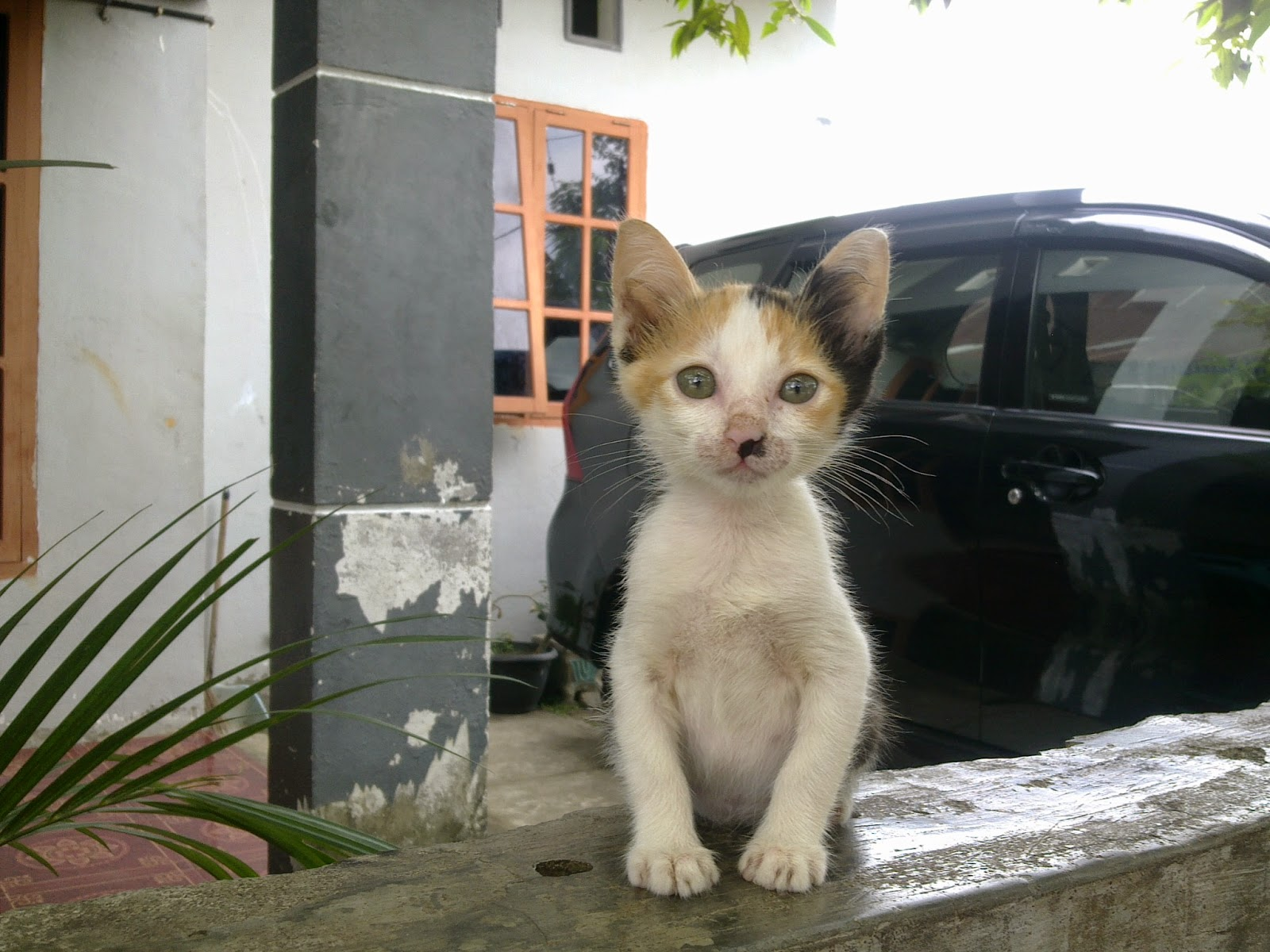 Foto Kucing Lucu Kucing Ku Kucing Page 2
