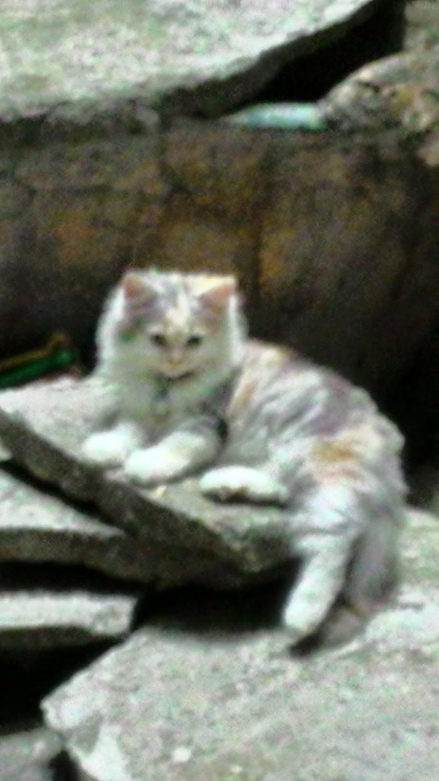 Foto Kucing Lucu Kucing Ku Kucing